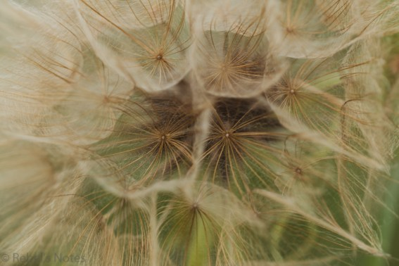 The inside of some kind of 'flower' (no, this was not a dandelion).