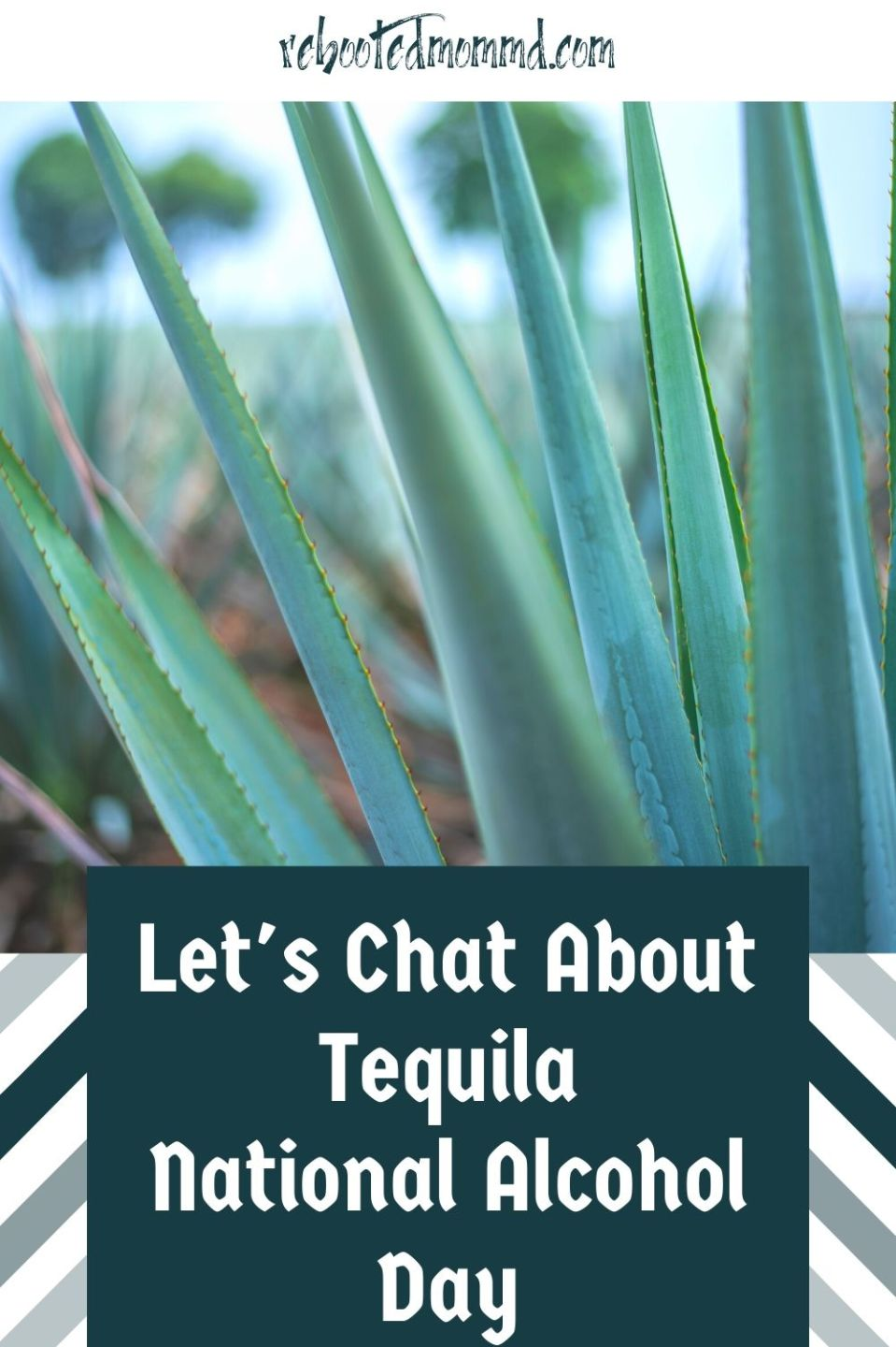 Let\'s Chat about Tequila