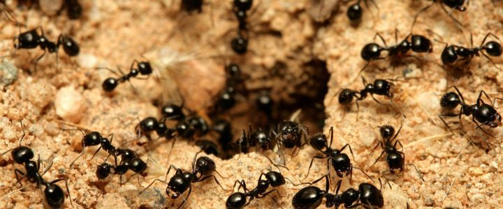How to Get Rid of Ants in the Home