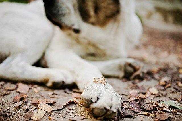 Hochzeitsfotos mit Hund Ideen  recorders