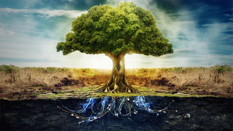 https://i0.wp.com/rec.or.id/images/article/Apakah-yang-dimaksud-dengan-Pohon-pengetahuan-tentang-yang-baik-dan-yang-jahat.jpg Apakah yang dimaksud dengan Pohon pengetahuan tentang yang baik dan yang jahat?