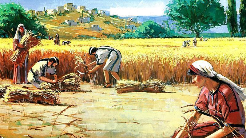 https://i0.wp.com/rec.or.id/images/article/Eksposisi-kitab-Rut--Anugerah-Allah-dalam-Keselamatan-Manusia-Bagian-2-Melalui-Hukum-Gleaning-(Rut-2-1-23).jpg Eksposisi kitab Rut : Anugerah Allah dalam Keselamatan Manusia Bagian 2: Melalui Hukum Gleaning (Rut 2:1-23)