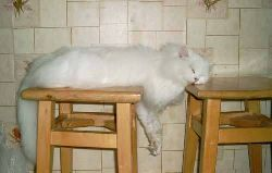 gato dormir.jpg