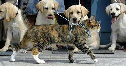 4-stupid-dogs.jpg