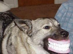 doggy-dentures.jpg