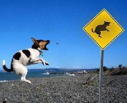 dog-jump.jpg