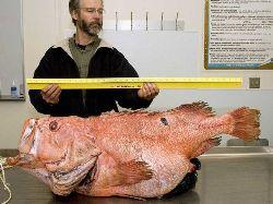 Enormous+Fish.jpg