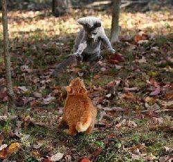 funny-cats-a1.jpg