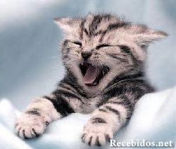 funny-cats-a10.jpg