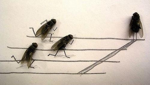 arte-moscas-4
