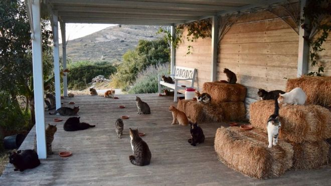 Fancy Greek island life? Pet cat treatment right into the deal