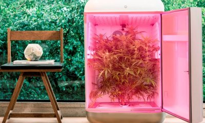 Seedo Unveils World's First Fully Automated Cannabis Farm