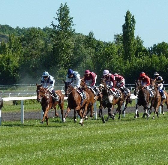 Expert Guides on Free Horse Racing Picks