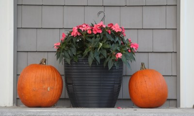 Watertown asks residents to consider plastic pumpkins so rats don't eat them