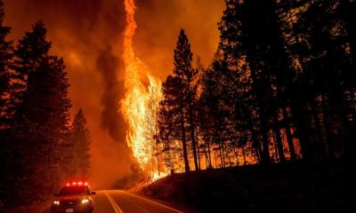 Forest thinning and wildfires: Some environmental groups question practice, scientists say evidence is overwhelming