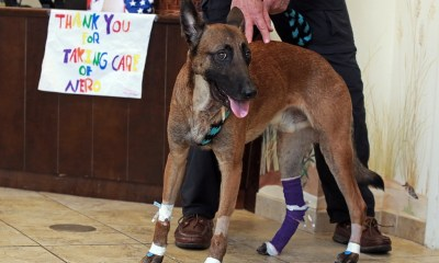 'Nero's Bill' to protect K9s receives favorable report, moves toward becoming law
