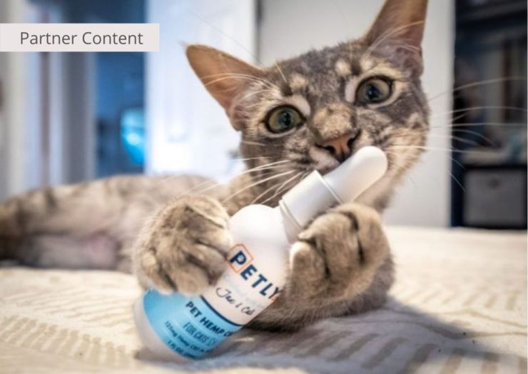 CBD for Cats: Why Petly CBD Is The Purr-fect Brand For Your Cat
