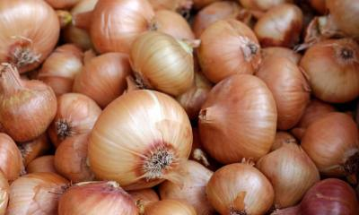 Tainted onions linked to bacterial illnesses among 23 Minnesotans