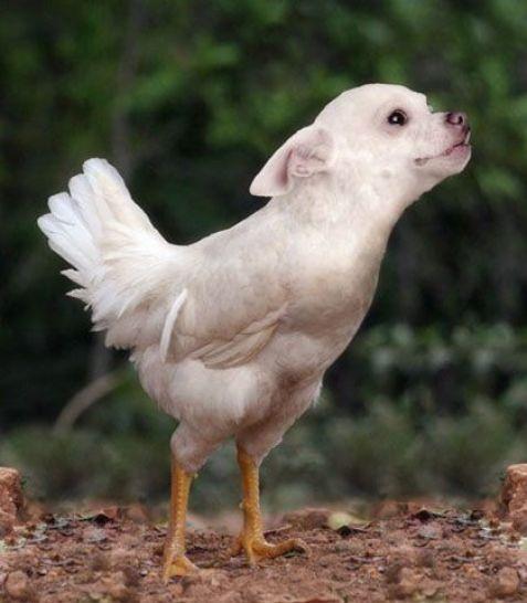 BirdDog10