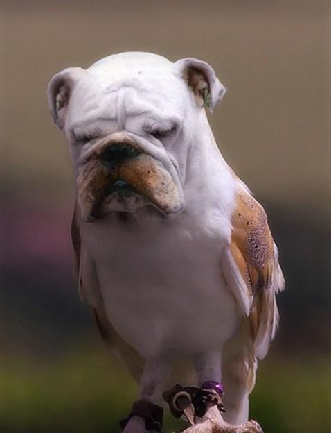 BirdDog3