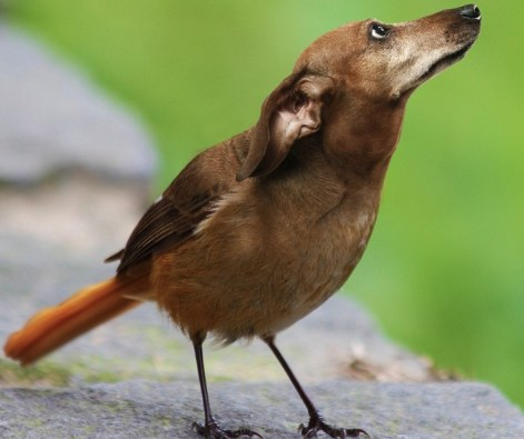 BirdDog5