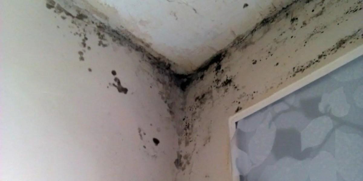 humedad en paredes - Pastel de verano con pan de molde