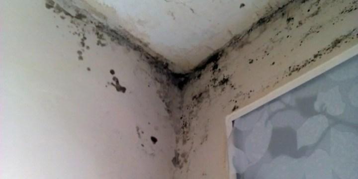 humedad en paredes - Remedio casero para humedad en paredes