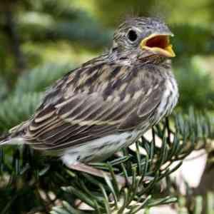 7df38b307602e35858bf410f5943c060 - ▷ El pequeño pájaro 📖