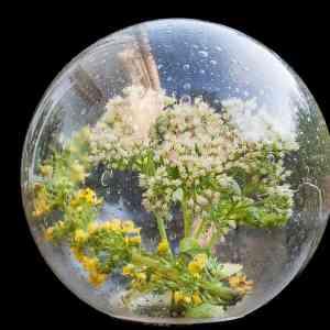 5d2e877d84bab94d7b9ec332bc8499a9 - ▷ Se reflejan las flores 📖