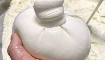 Burrata Mozzarella
