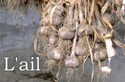 Image : Ail  - Gousses et têtes d'ail