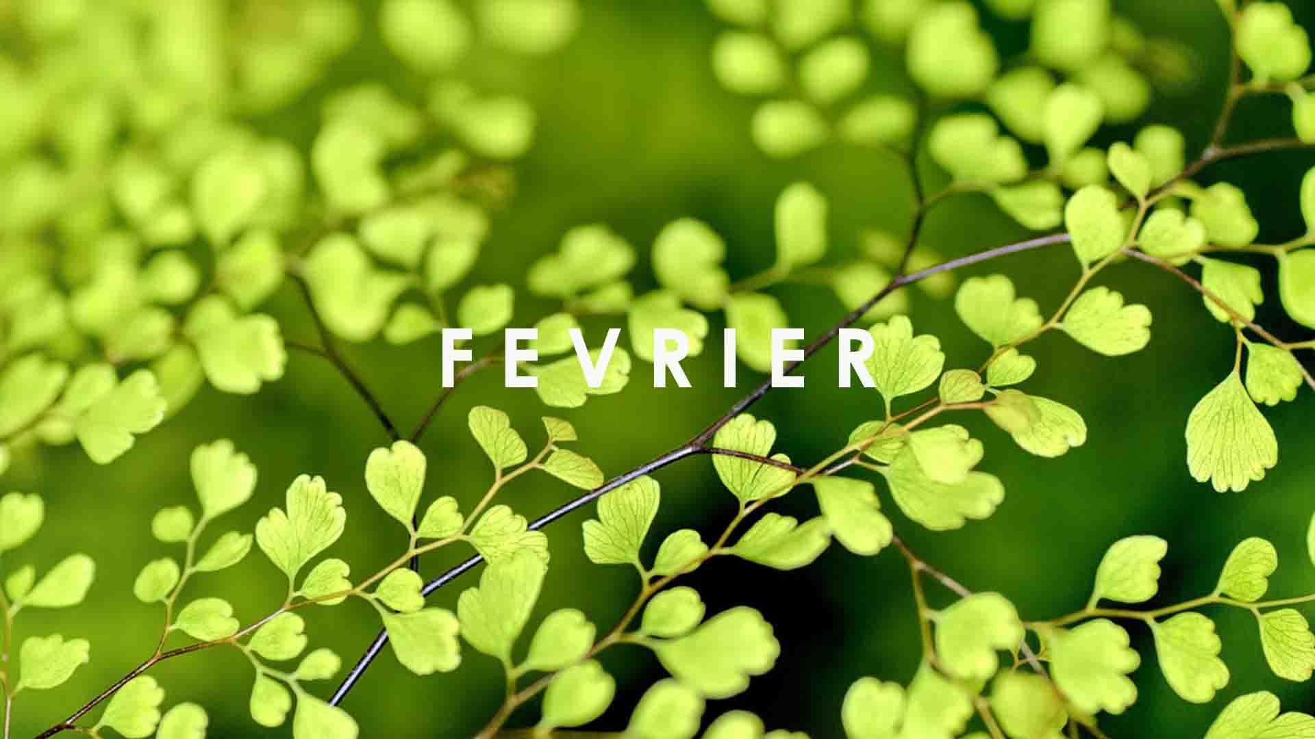 fruits legume saison fevrier