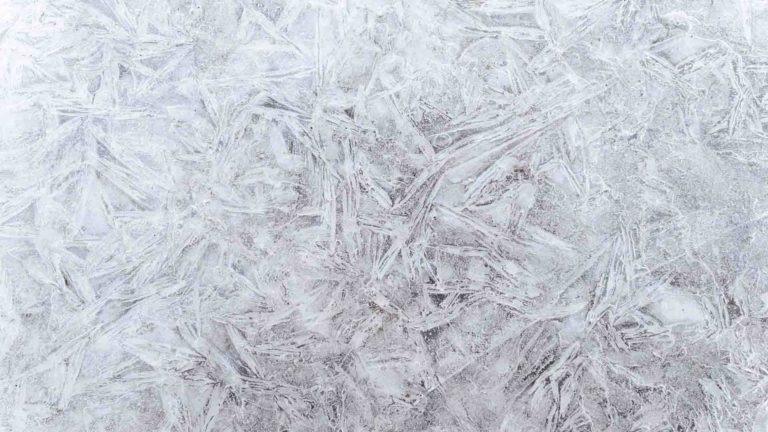 congeler organisation