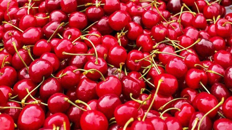 fruits legumes saison cerise