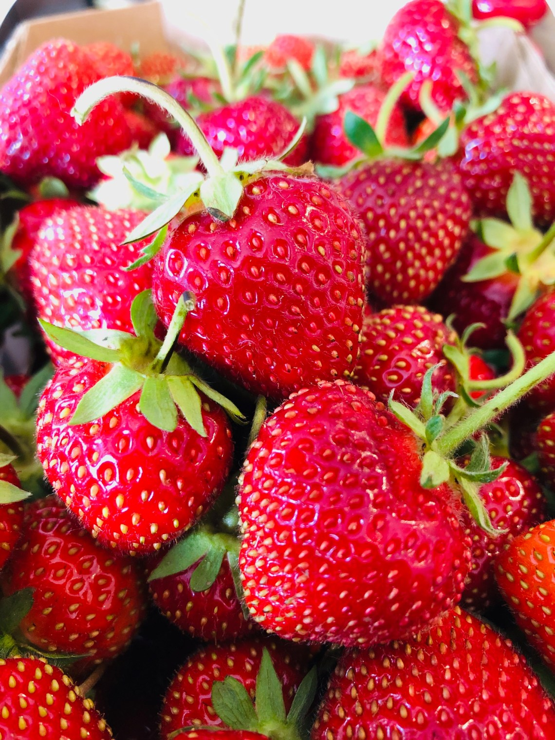 #fraises #fraise #commentconserverlesfraisespluslongtemps #recettesfamille #recettesansnoix #recettesansarachide