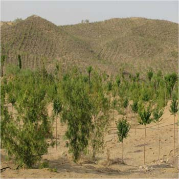 Desert Greening Cases, Desert Green Landscaping