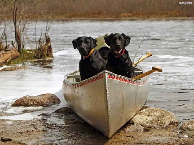 dogs-wallpapers-35-youwall-black-dogs-free-picture