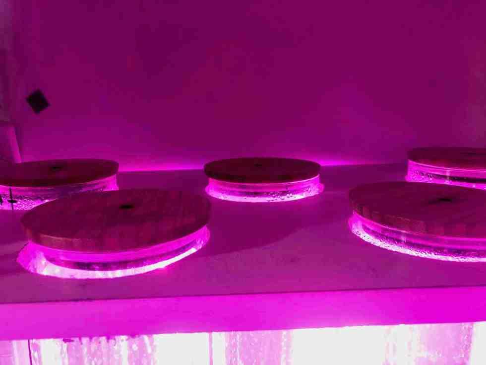 réacteur phytoplancton vu du dessus