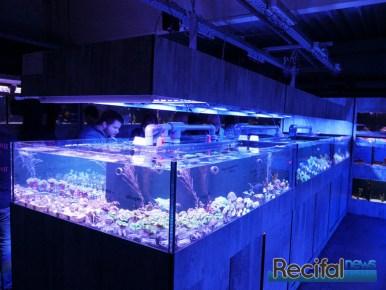 poisson-or-47-ans-coraux2