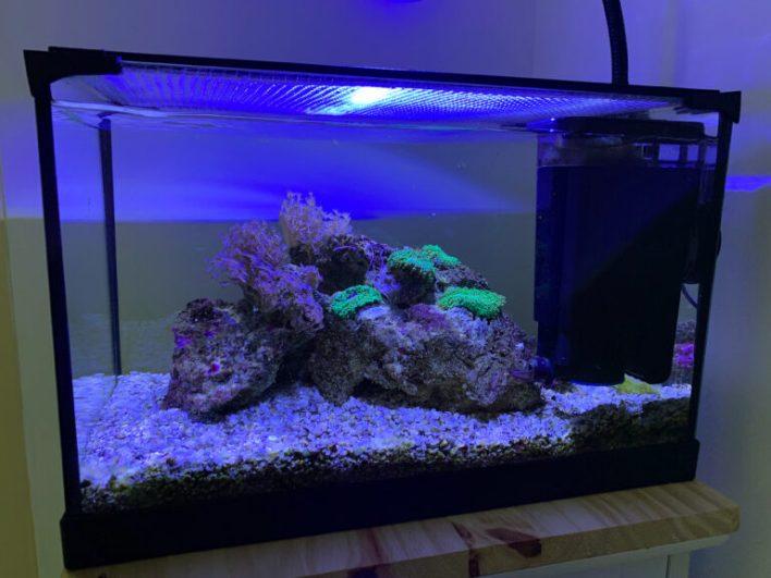 L'aquarium h+48h
