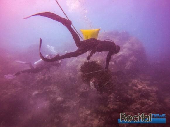 Le deplacement de grosses pièces de coraux demande des techniques de plongée évoluées.