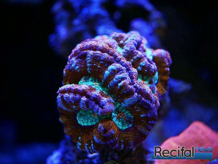 red-sea-reefbeat-willsoni