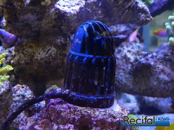 poisson-or-aquarium-recifal-tunze