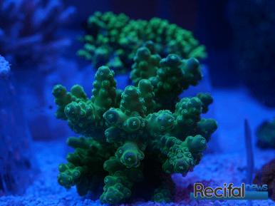 mace-vivarium-2019-coraux-13