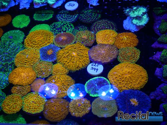 mace-vivarium-2019-coraux-16