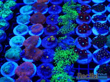 mace-vivarium-2019-coraux-18