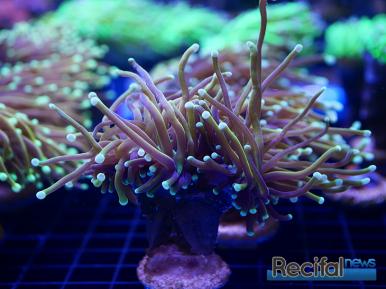 mace-vivarium-2019-coraux-20