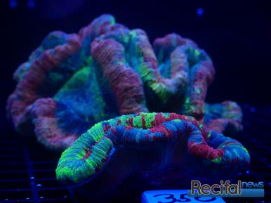 mace-vivarium-2019-coraux-34