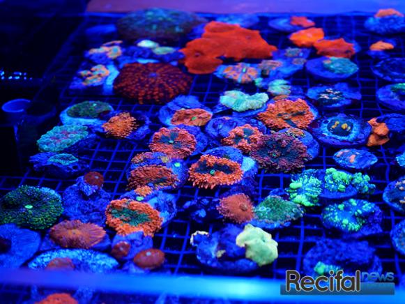 mace-vivarium-2019-coraux-5