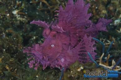 La coloration violette est moins rare